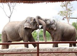2 chú voi liu và led nhất ký cách ly covid 19,phần 2