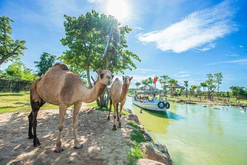 river safari nam hội an điểm đến lôi quấn 1