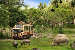 Vườn thú safari là gì