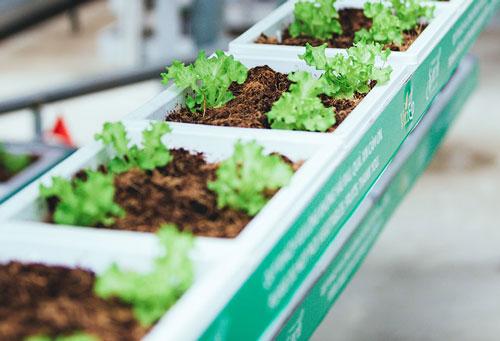 Vineco mô hình trồng rau sạch thú vị